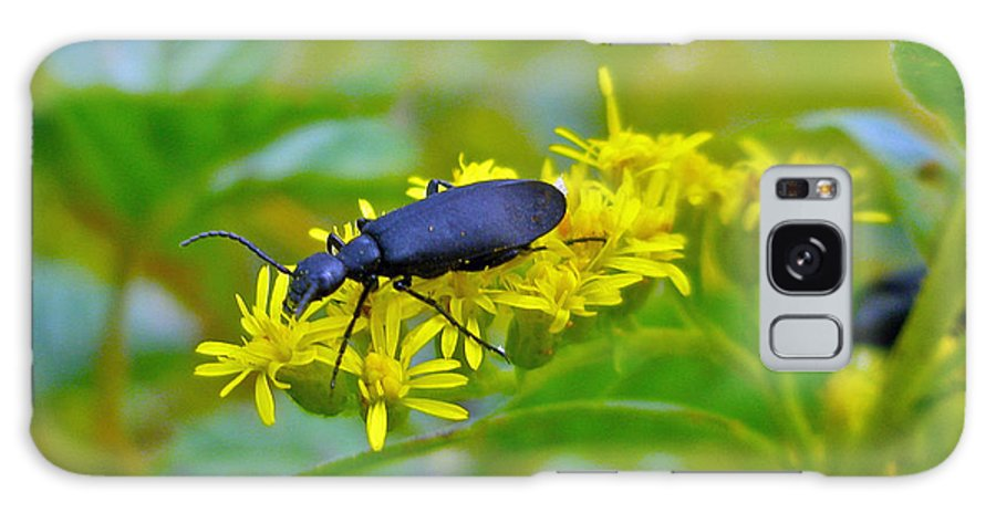Beetle Galaxy S8 Case featuring the photograph Blister Beetle On Yellow Autumn Flowers by Mother Nature