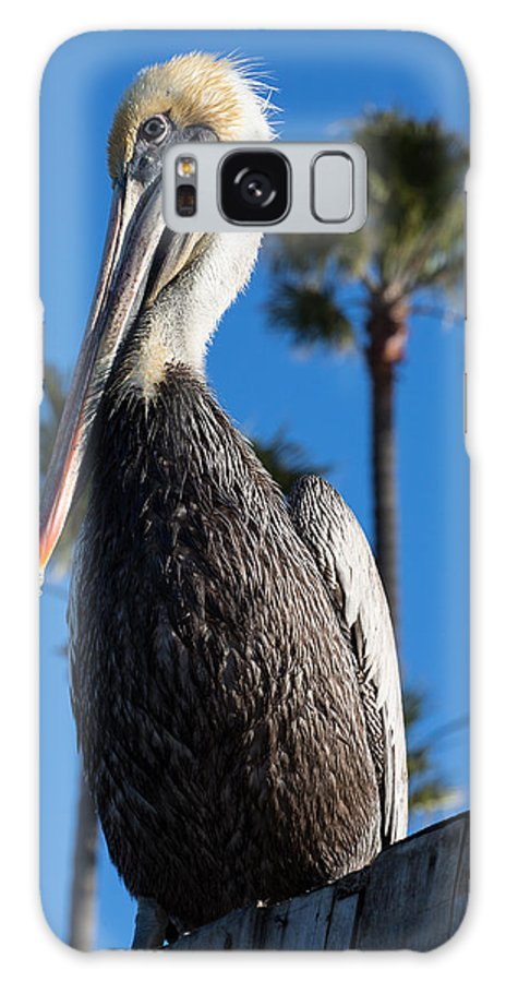 Blond Galaxy S8 Case featuring the photograph Blond Pelican by John Daly