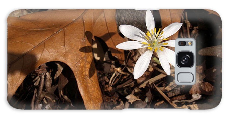 Wildflower Galaxy S8 Case featuring the photograph Bloodroot On Forest Floor - Pennsylvania by Anna Lisa Yoder