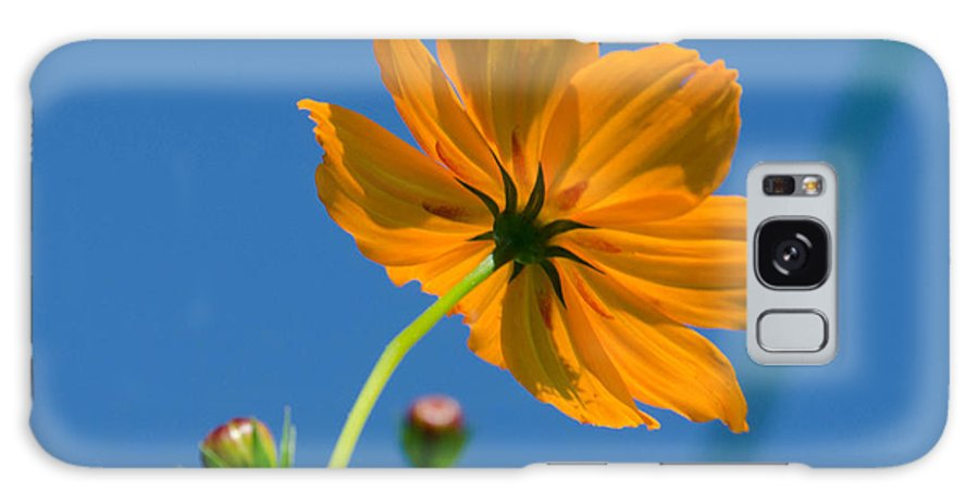 Flower Galaxy S8 Case featuring the photograph Blooming By My Self by Randy Roberts