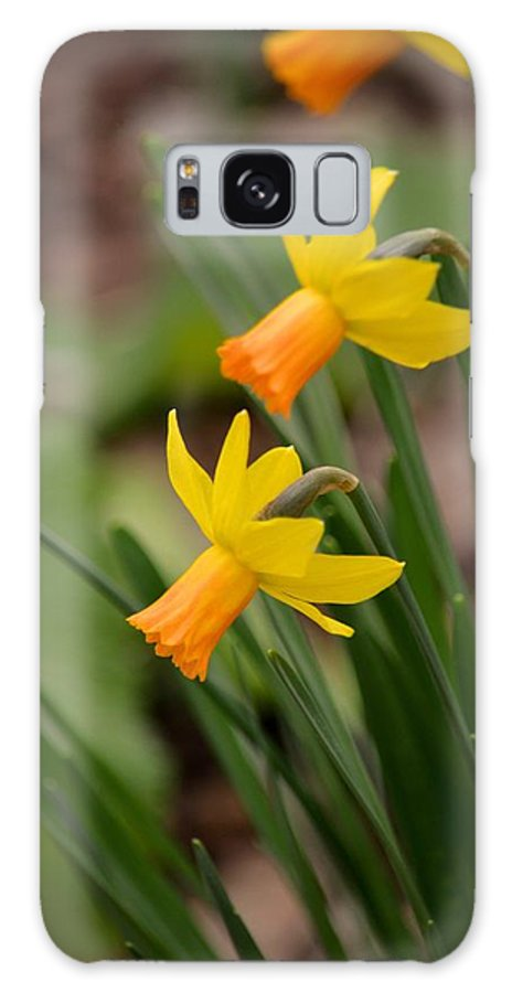 Blooming Daffodils Galaxy S8 Case featuring the photograph Blooming Daffodils by Maria Urso
