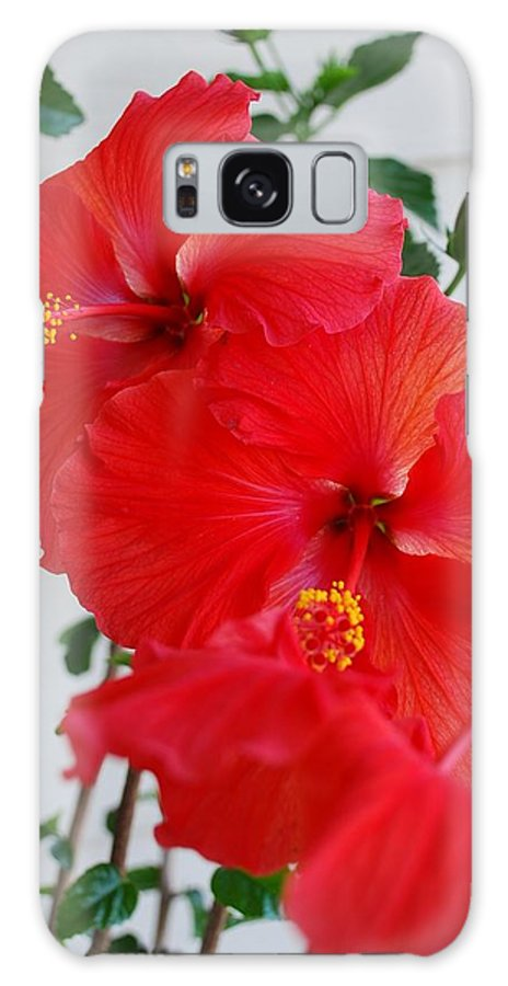 Hibiscus Galaxy S8 Case featuring the photograph Blooming Hibiscus by Mary Griffin