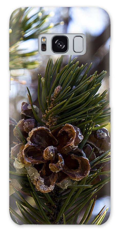 Grand Canyon Galaxy S8 Case featuring the photograph Blooming Pinecone by Angus Hooper Iii