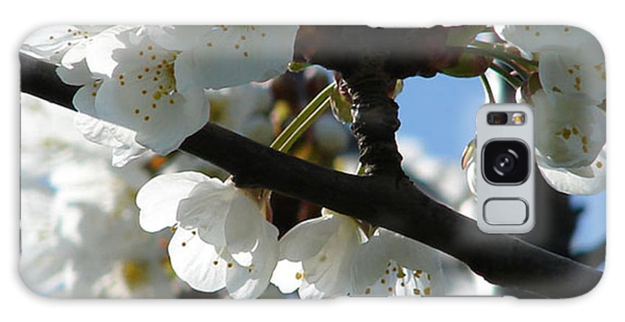 Blossoms Galaxy S8 Case featuring the photograph Blossoms 4 by Carol Lynch