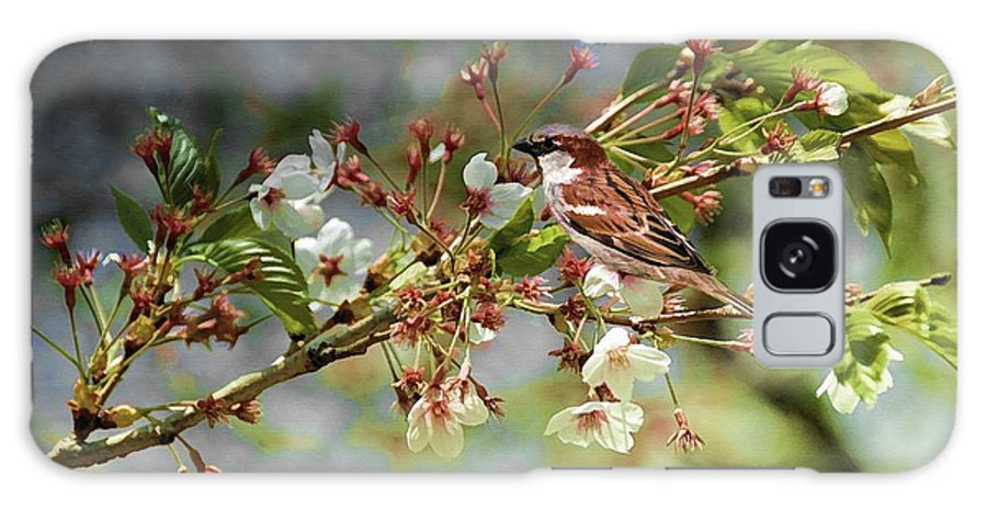 Bird Galaxy S8 Case featuring the photograph Blossoms And Sparrow by Elaine Manley