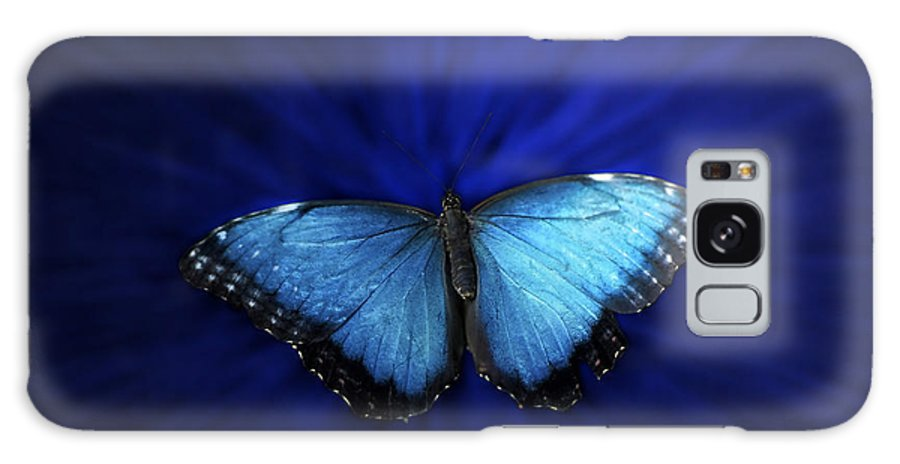 Il Galaxy S8 Case featuring the photograph Blue Butterfly Ascending 02 by Thomas Woolworth