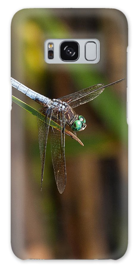 Blue Dasher Galaxy S8 Case featuring the photograph Blue Dasher by Scott Bush