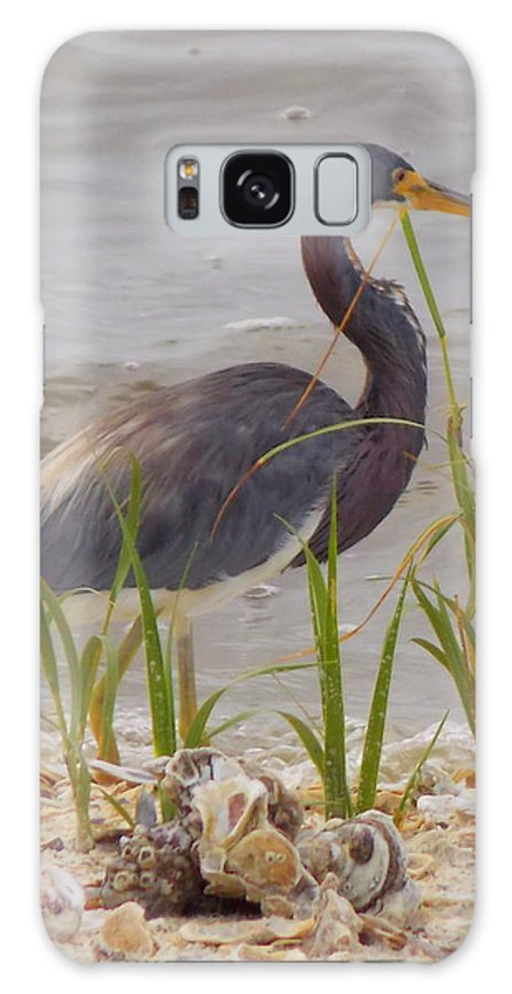 Blue Heron Art Galaxy S8 Case featuring the photograph Blue Heron On Oyster Shell Beach by Sheri McLeroy