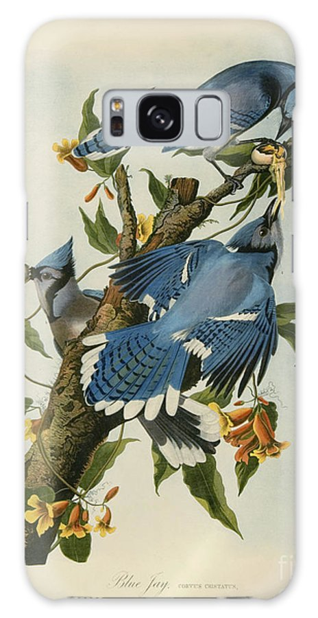 Special Collections Galaxy Case featuring the drawing Blue Jay by Celestial Images