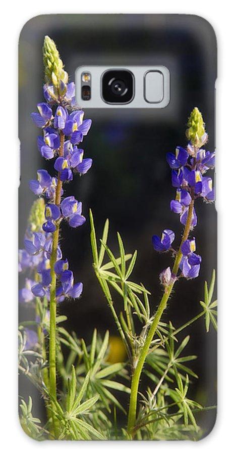 Blue Lupine Galaxy S8 Case featuring the photograph Blue Lupine by Saija Lehtonen