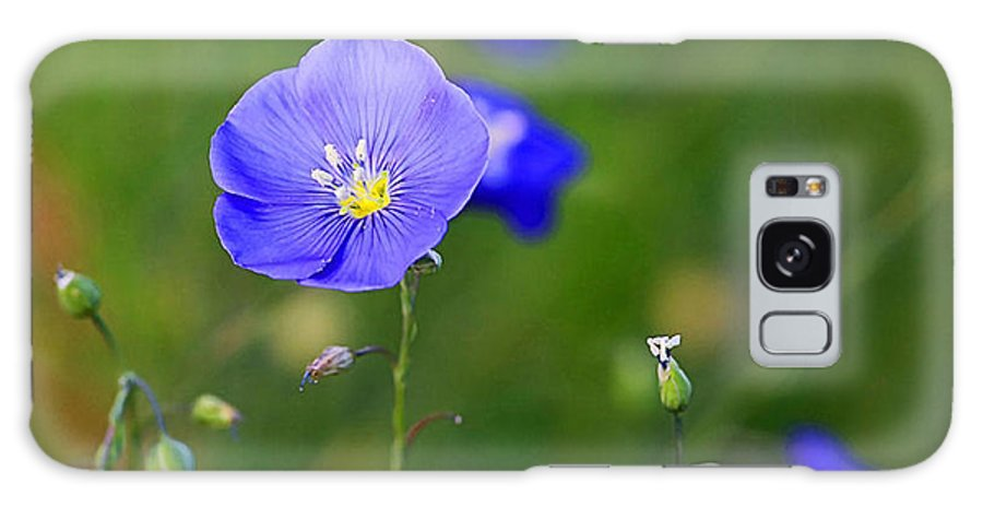 Blue Flower Galaxy S8 Case featuring the photograph Blue Morning Flowers by Todd Roach