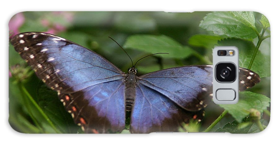 Blue Morpho Butterfly Galaxy S8 Case featuring the photograph Blue Morpho Butterfly by Denyse Duhaime