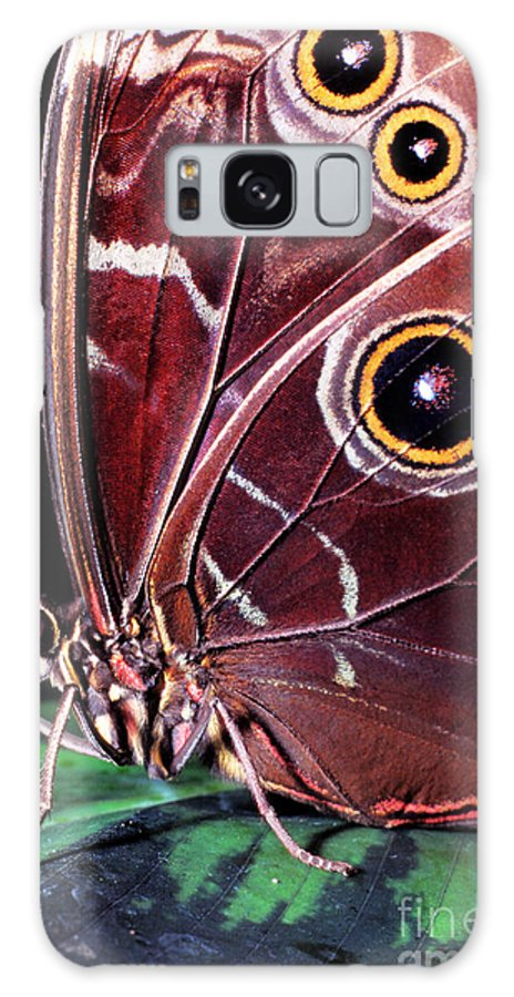Blue Morpho Galaxy S8 Case featuring the photograph Blue Morpho Butterfly by Thomas R Fletcher