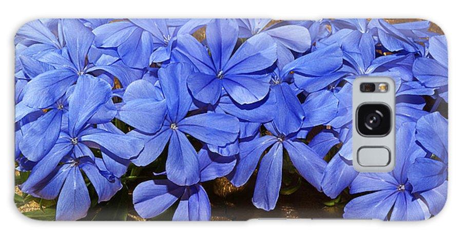 Plumbgo Galaxy S8 Case featuring the photograph Blue Plumbago by Phyllis Denton