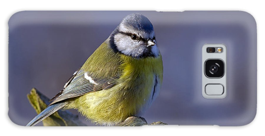 Blue Tit In The Blue Galaxy S8 Case featuring the photograph Blue Tit In The Blue by Torbjorn Swenelius