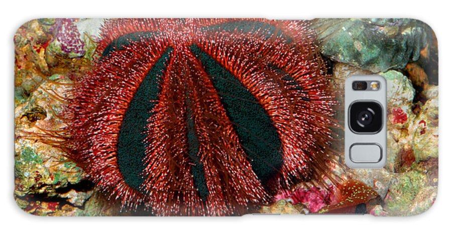 Urchin Galaxy S8 Case featuring the digital art Blue Tuxedo Sea Urchin by Wernher Krutein
