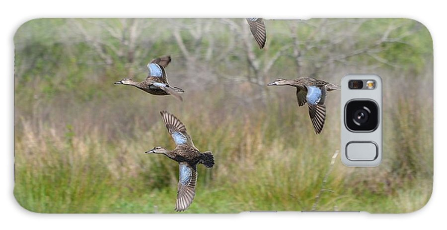 Ducks Galaxy S8 Case featuring the photograph Blue Winged Teal Ducks In Flight by Steve Griffin