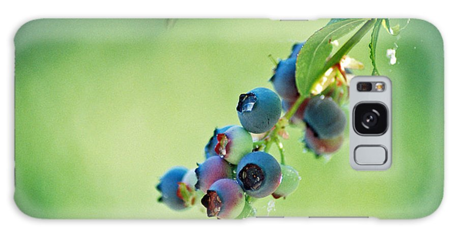 Blueberries Galaxy S8 Case featuring the photograph Blueberries by Frank Larkin