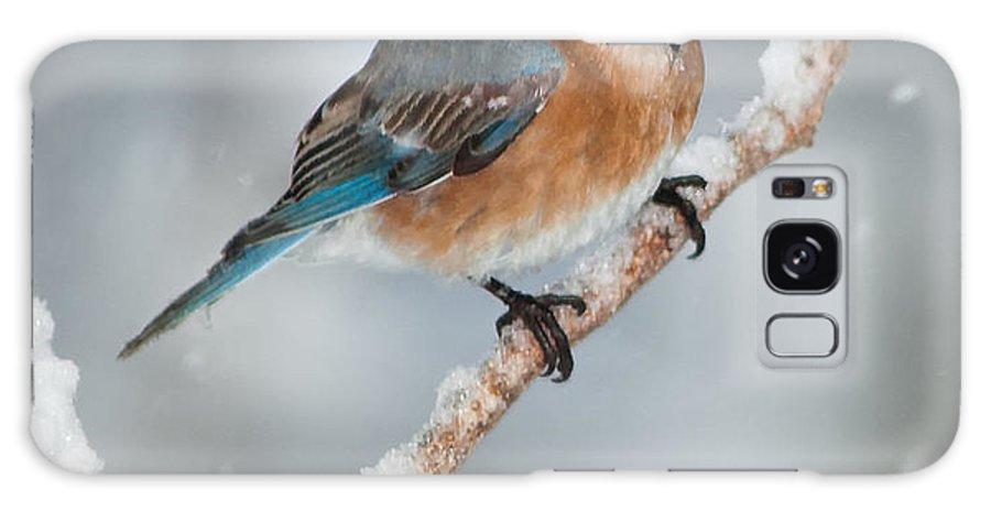 Bluebird Galaxy S8 Case featuring the photograph Bluebird by Boyd E Van der Laan