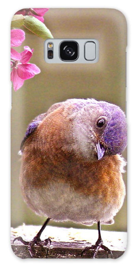 Animals Galaxy S8 Case featuring the photograph Bluebird by Jean Noren