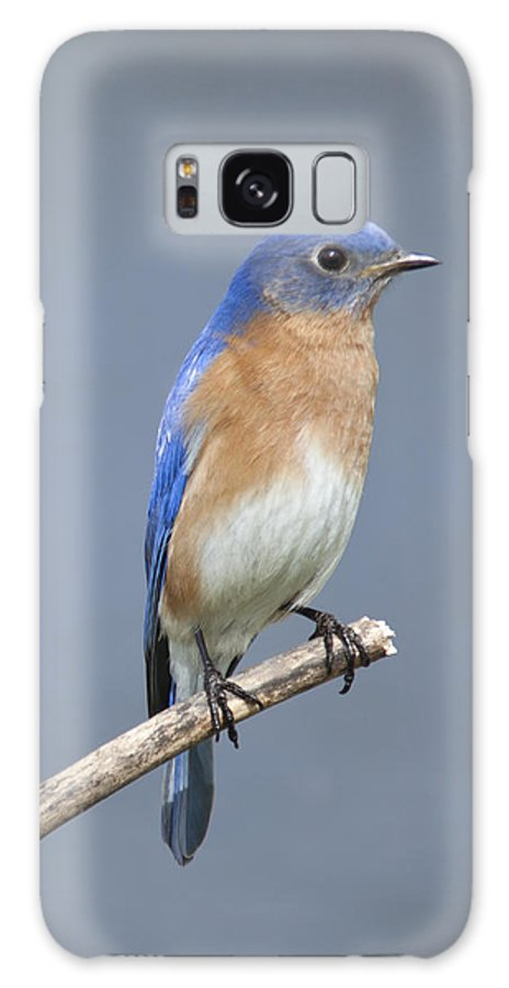 Bluebird Galaxy S8 Case featuring the photograph Bluebird by John Crothers