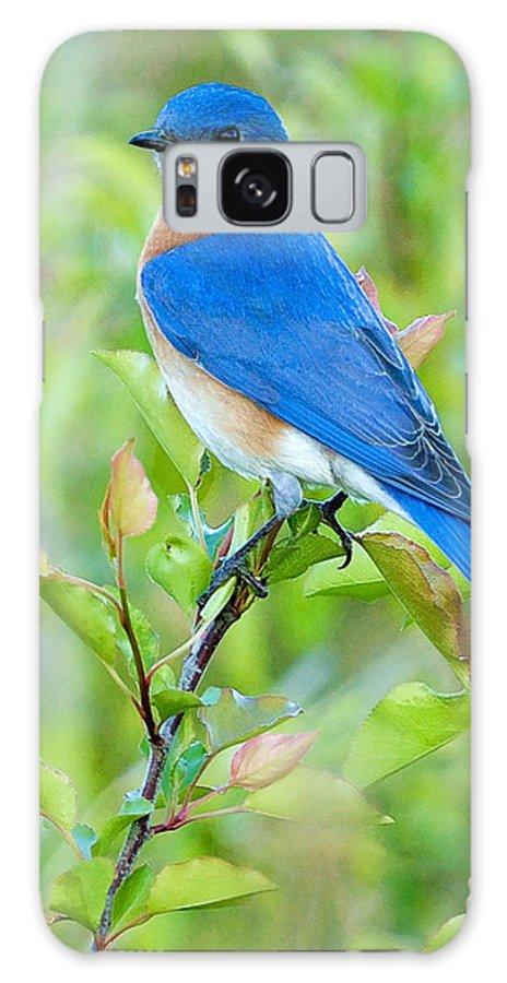 Bluebird Galaxy S8 Case featuring the photograph Bluebird Joy by William Jobes