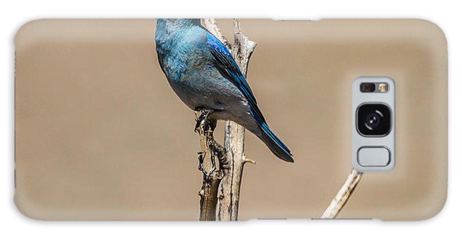 Bluebird Galaxy S8 Case featuring the photograph Bluebird by Mitch Shindelbower
