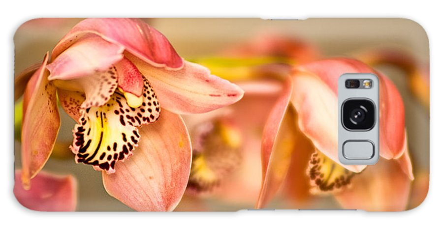 Orchid Galaxy S8 Case featuring the photograph Blush Orchid by Rick Barnard