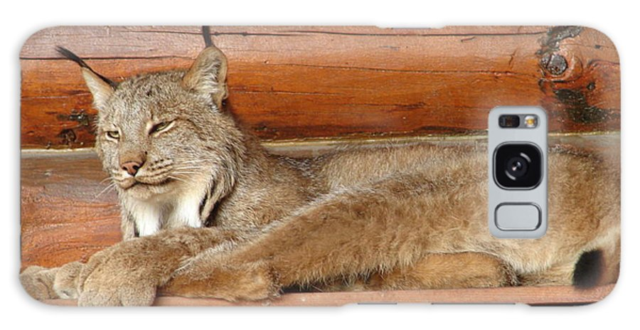 Animal Galaxy S8 Case featuring the photograph Bobcat by Lew Davis