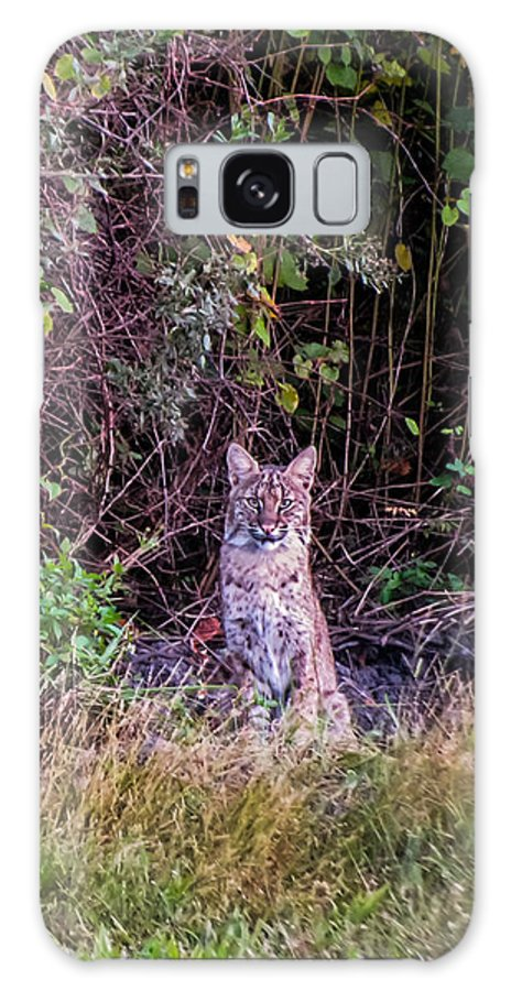 Bobcat Galaxy S8 Case featuring the photograph Bobcat by Zina Stromberg