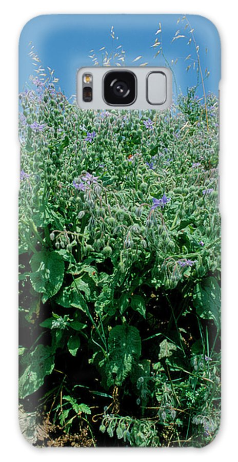 Borago Officinalis Galaxy S8 Case featuring the photograph Borage (borago Officinalis) by Bruno Petriglia/science Photo Library