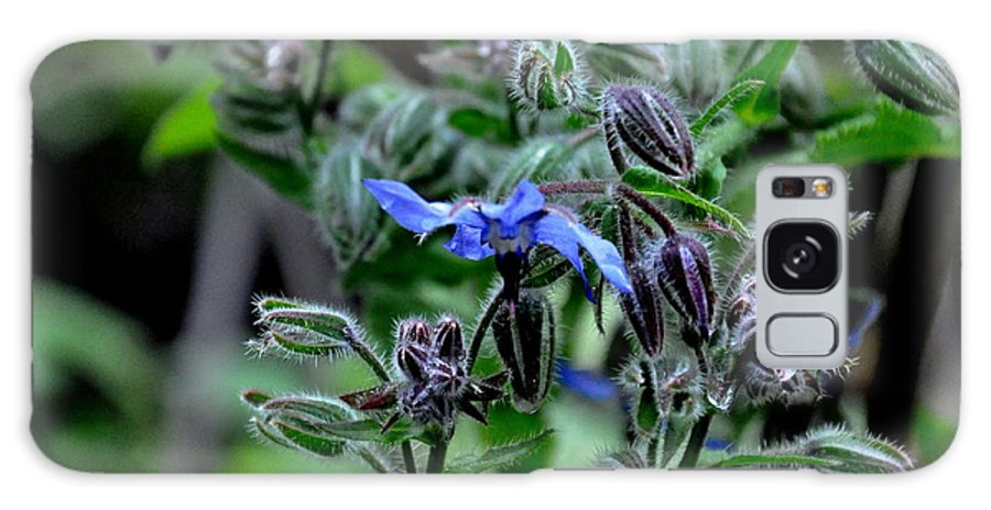 Borage Galaxy S8 Case featuring the photograph Borage by Tanya Searcy