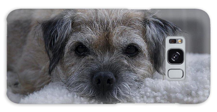 Border Terrier Galaxy S8 Case featuring the photograph Border Terrier Netherlands by Ronald Jansen