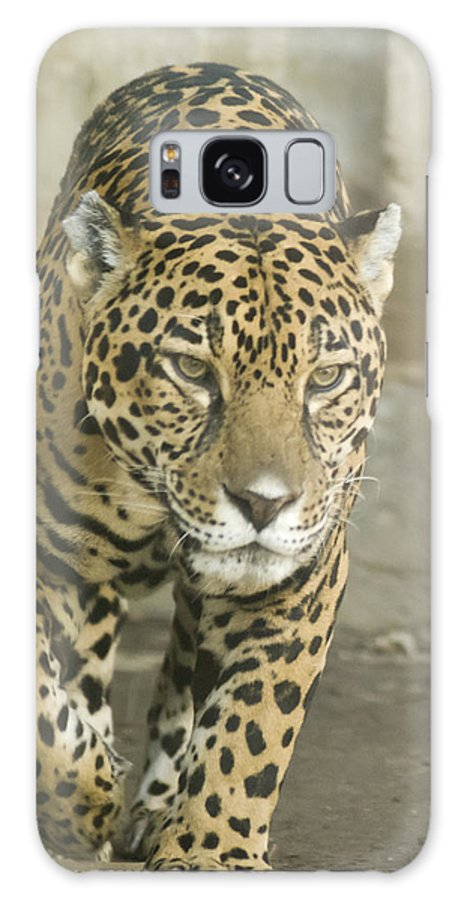 Cat Galaxy S8 Case featuring the mixed media Born To Run by Trish Tritz