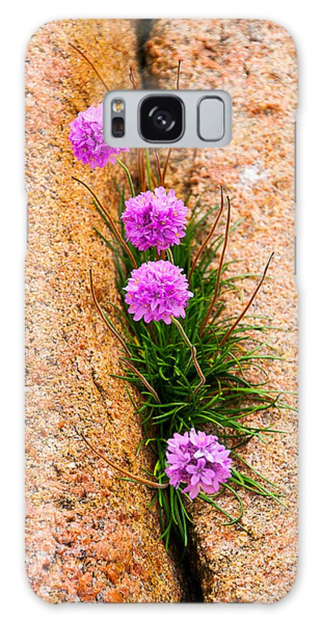 Flowers Galaxy S8 Case featuring the photograph Botanica Series - Flowers In The Crack by Michael Brewer