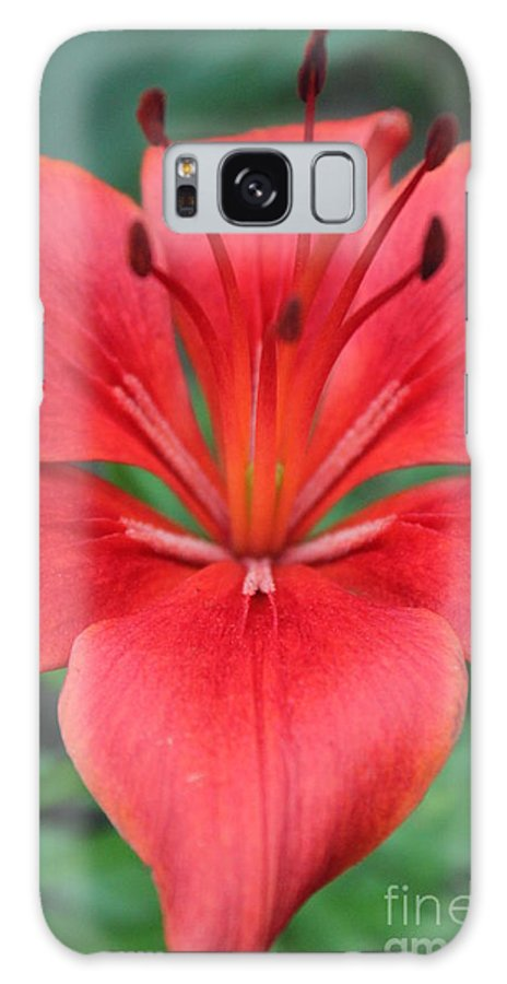 Galaxy S8 Case featuring the photograph Botanical Beauty 2 by Jennifer E Doll