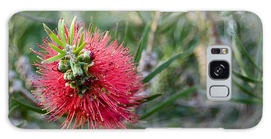 Bottlebrush Galaxy S8 Case featuring the photograph Bottlebrush by Heather Provan