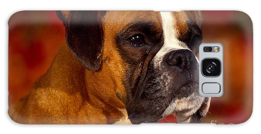 Boxer Galaxy S8 Case featuring the mixed media Boxer by Marvin Blaine