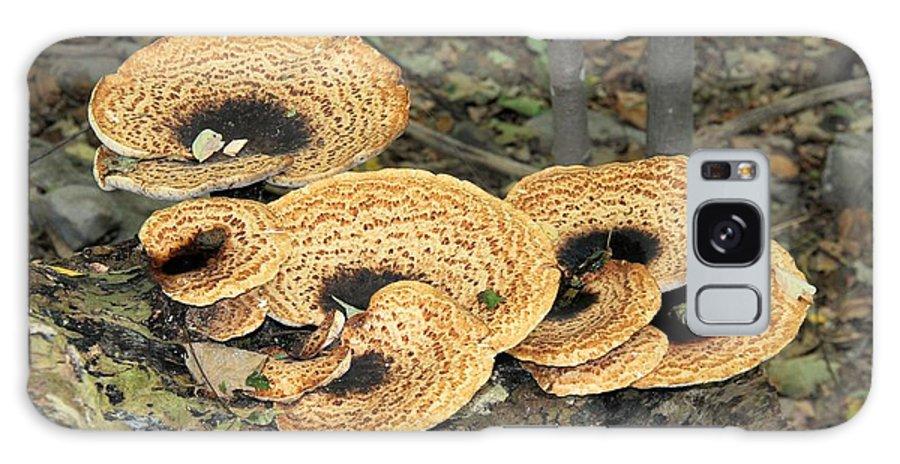 Bracket Fungi Galaxy S8 Case featuring the photograph Bracket Fungi by Doris Potter
