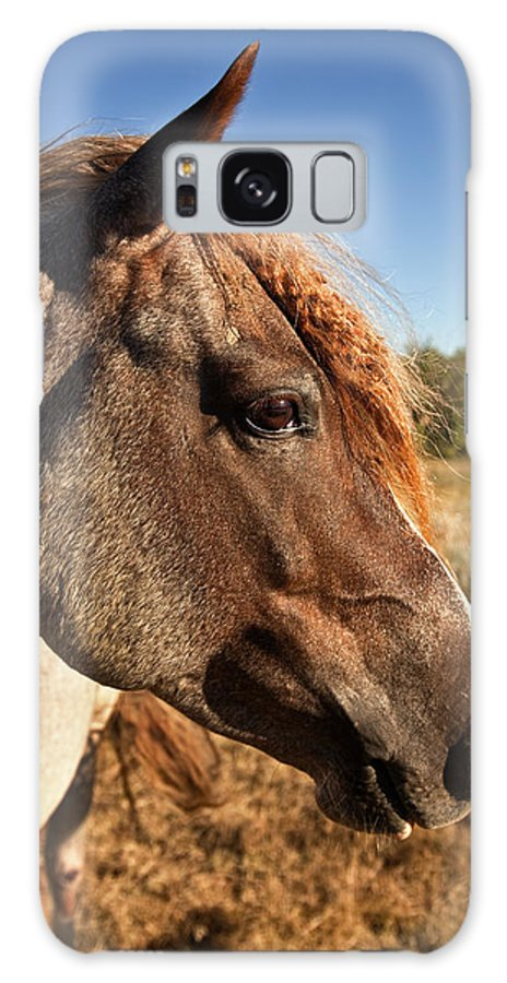Horse Galaxy S8 Case featuring the photograph Braids by Jack Milchanowski