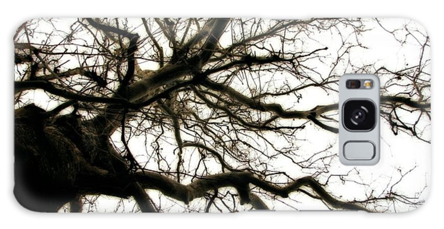 Branches Galaxy S8 Case featuring the photograph Branches by Michelle Calkins