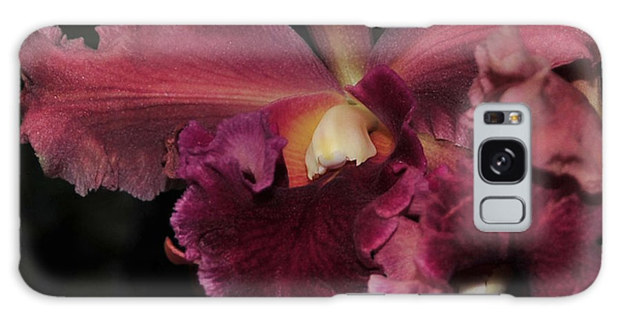 Orchid Galaxy S8 Case featuring the photograph Brassolaeliocattleya Helen Huntington Chevy Chase by Terri Winkler
