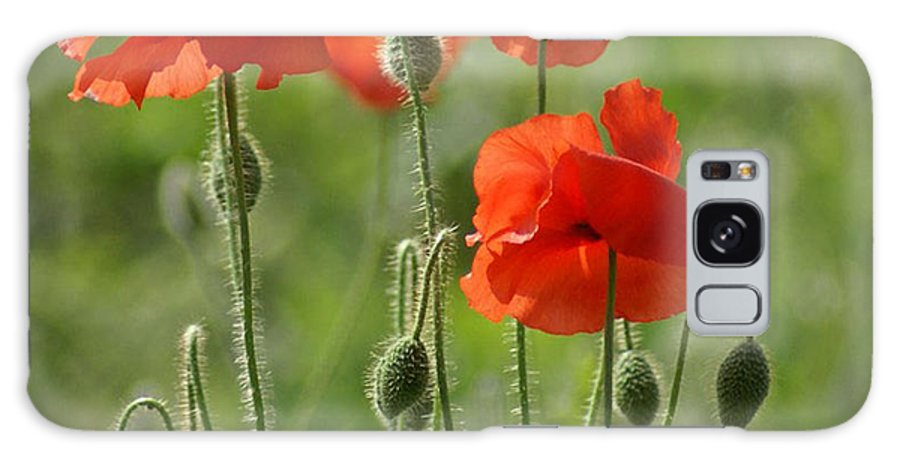 Poppies Galaxy S8 Case featuring the photograph Bright Poppies 2 by Carol Lynch