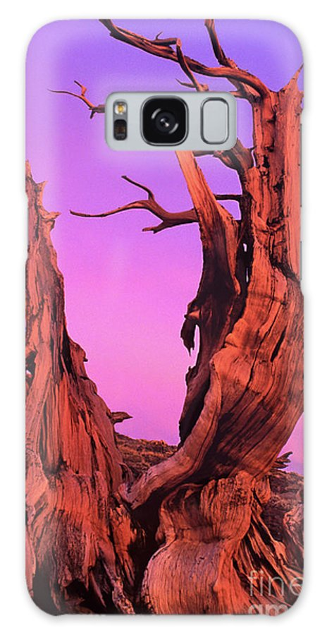 Bristlecone Galaxy S8 Case featuring the photograph Bristlecone Pine At Sunset White Mountains Californa by Dave Welling