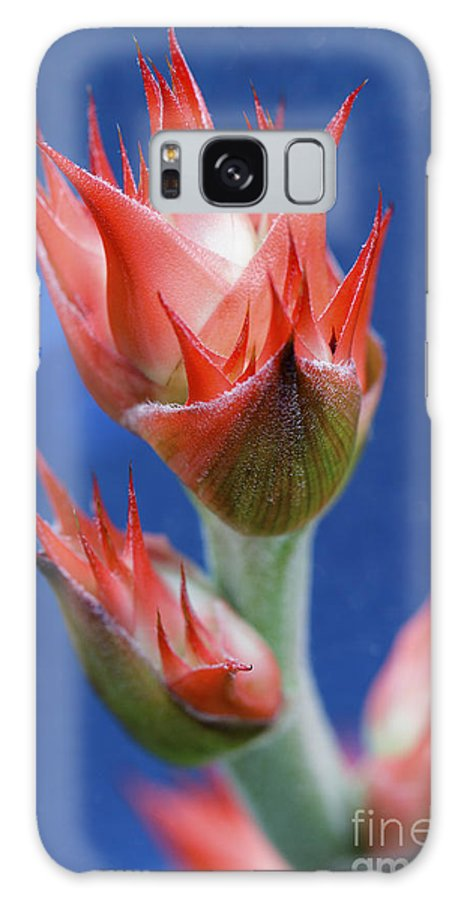 Bromeliad Galaxy S8 Case featuring the photograph Bromeliad On Blue by Thom Hanssen