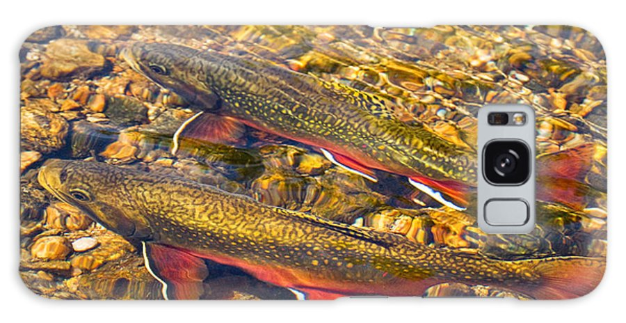 Animal Galaxy S8 Case featuring the photograph Brook Trout by Alice Cahill