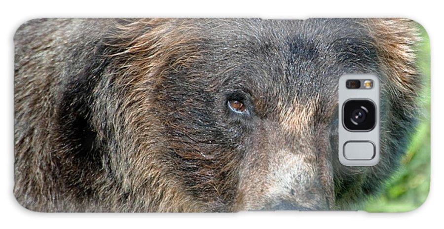 Alaska Galaxy S8 Case featuring the photograph Brown Bear by Clint Pickarsky