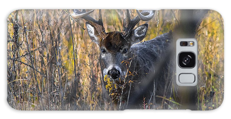 Wildlife Art Prints Galaxy S8 Case featuring the photograph Brush Buck by Garett Gabriel