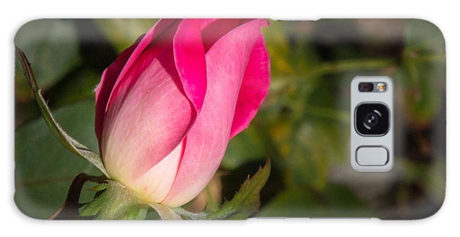 Flower Galaxy S8 Case featuring the photograph Budding Pink Rose by Shari Brase-Smith