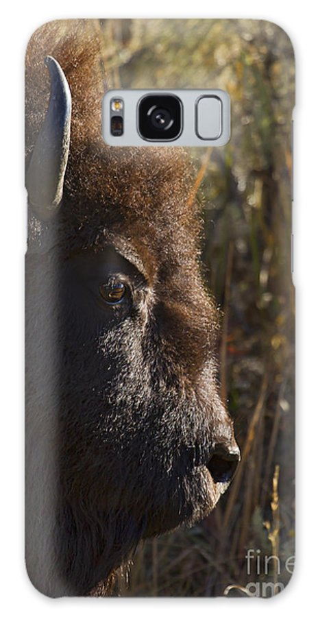 Buffalo Galaxy S8 Case featuring the photograph Buffalo  #9242 by J L Woody Wooden